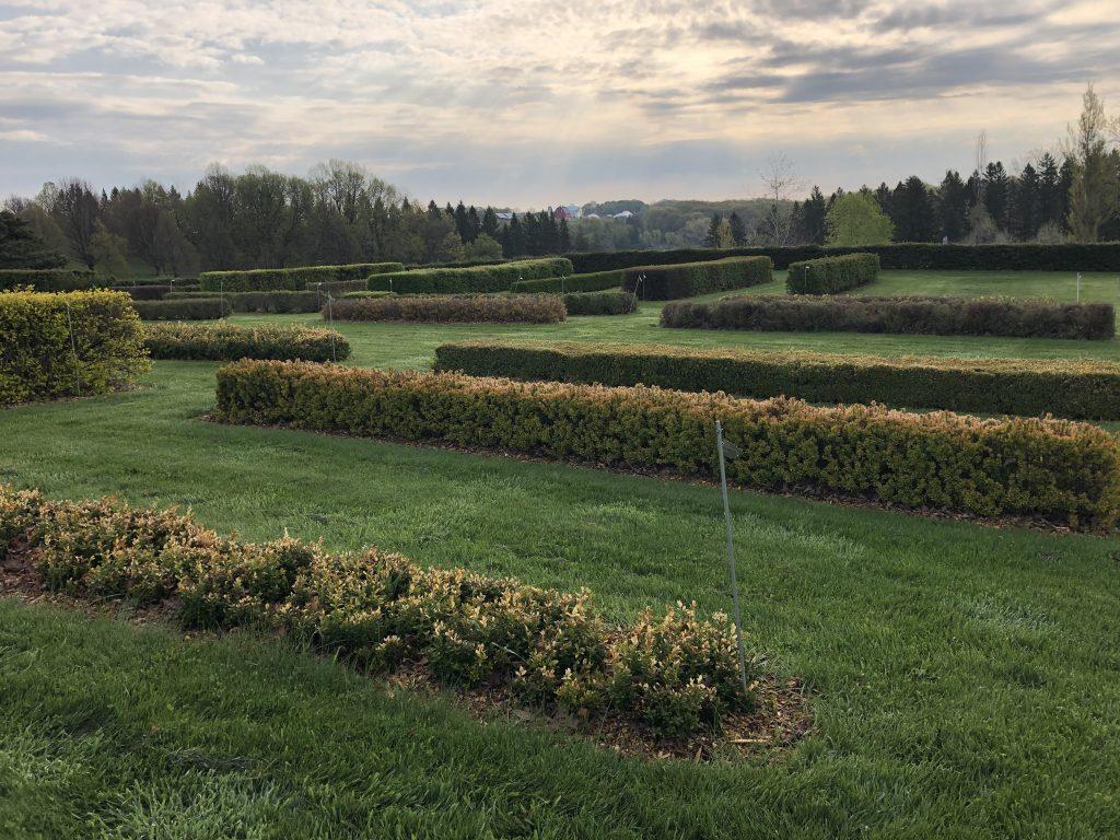 Minnesota Landscape Arboretum Hedge Display