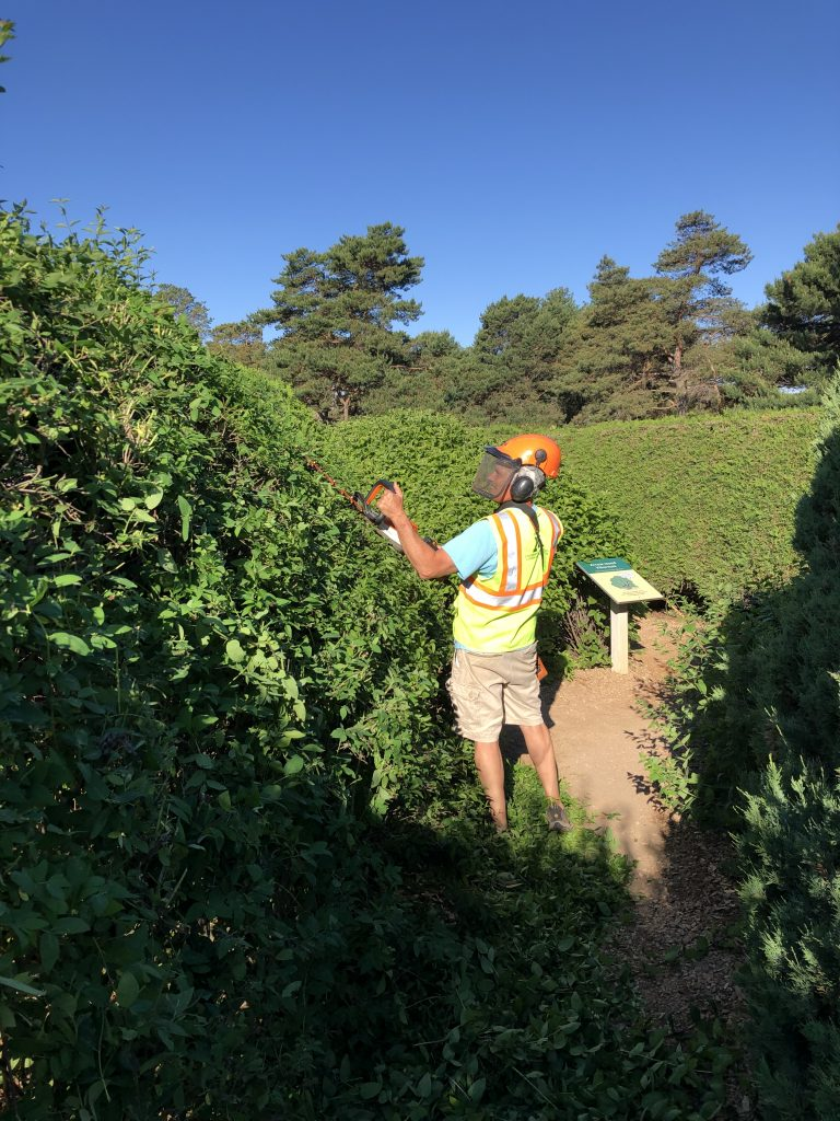 A man pruning hedges with a helmet, face mask, and reflective vest.