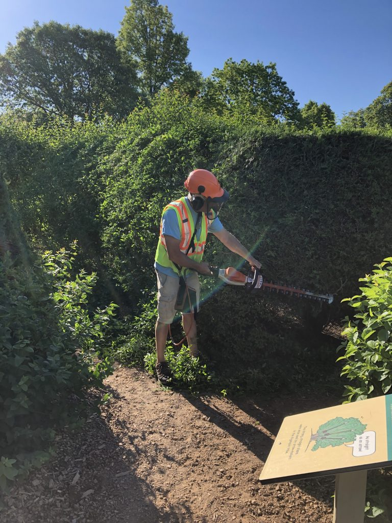 Darwin Pellett, MLA Landscape Gardener, uses a gas powered trimmer to prune the hedges and the Maze Garden.