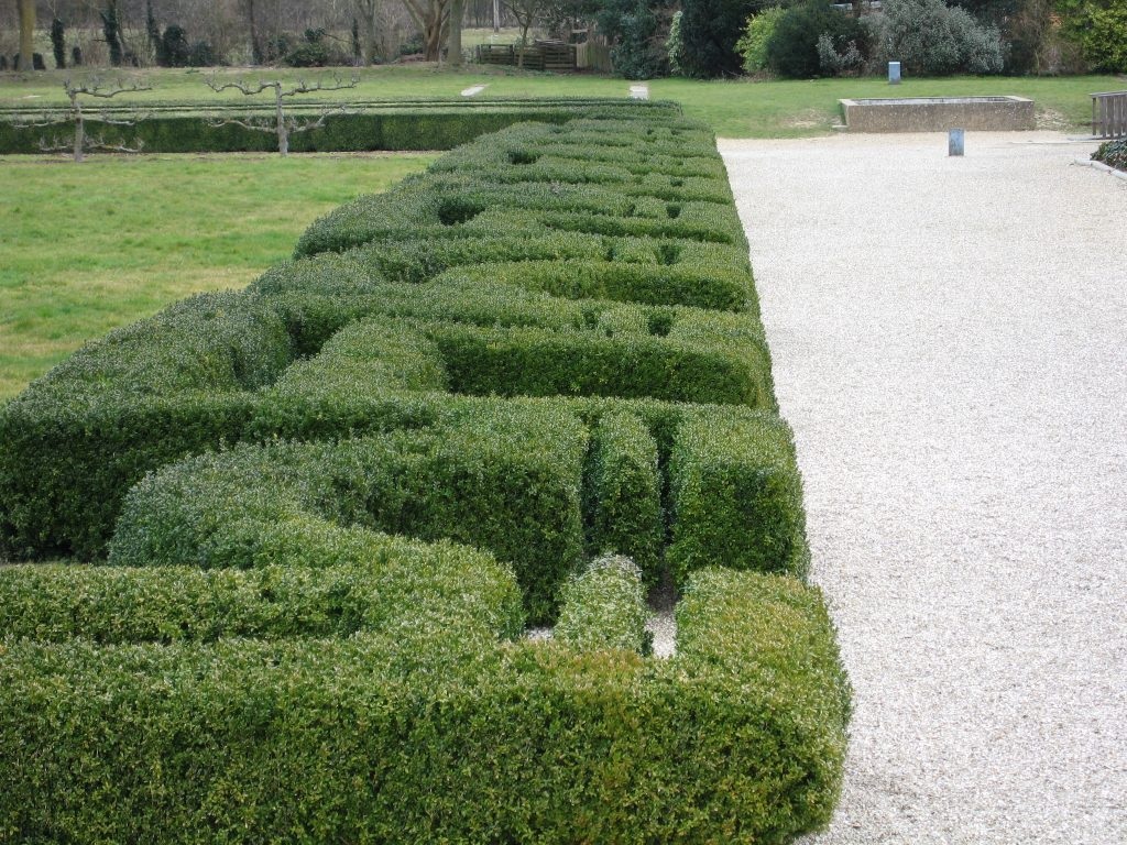 A thick, dense hedge in a pattern