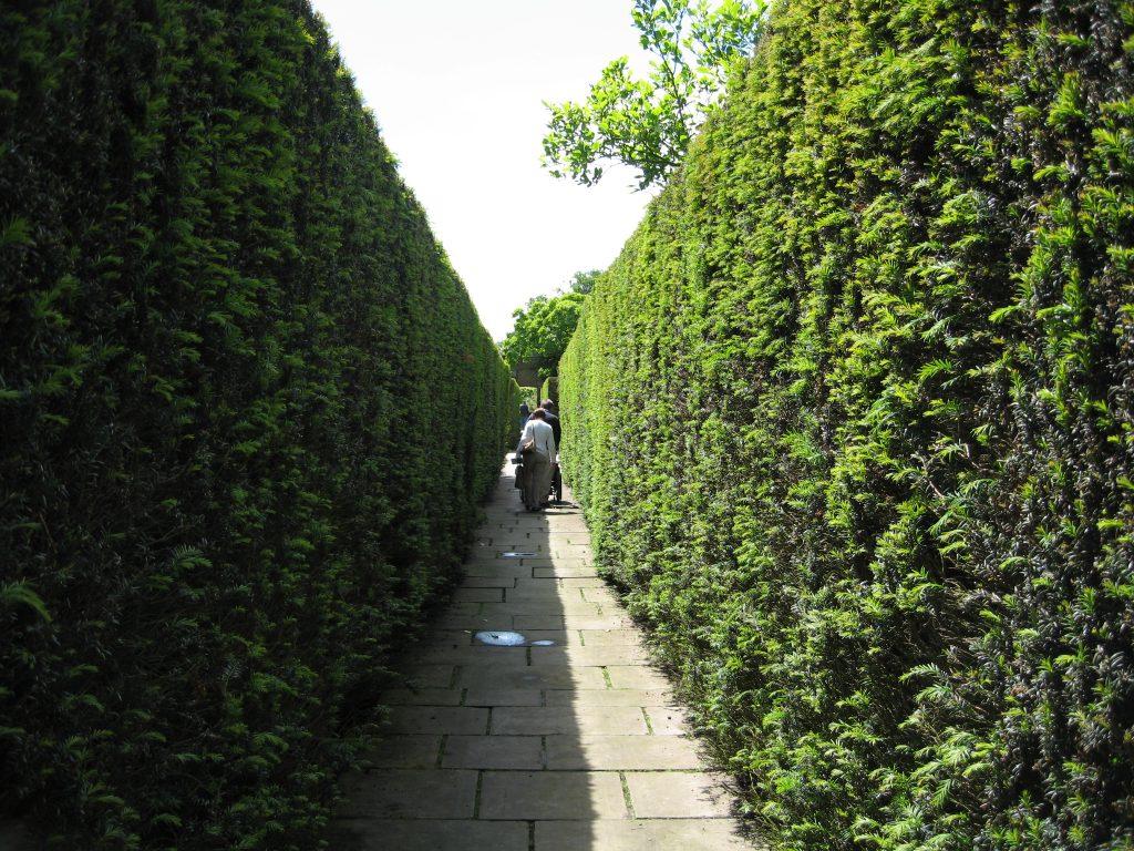 Sissinghurst's double yew hedge divide garden rooms.