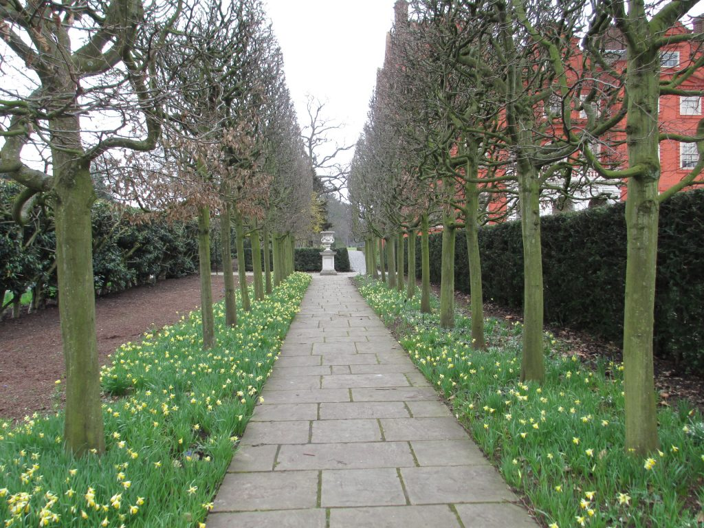 A double hedge of lime trees and evergreen yews mark a formal walkway in Kew Gardens.