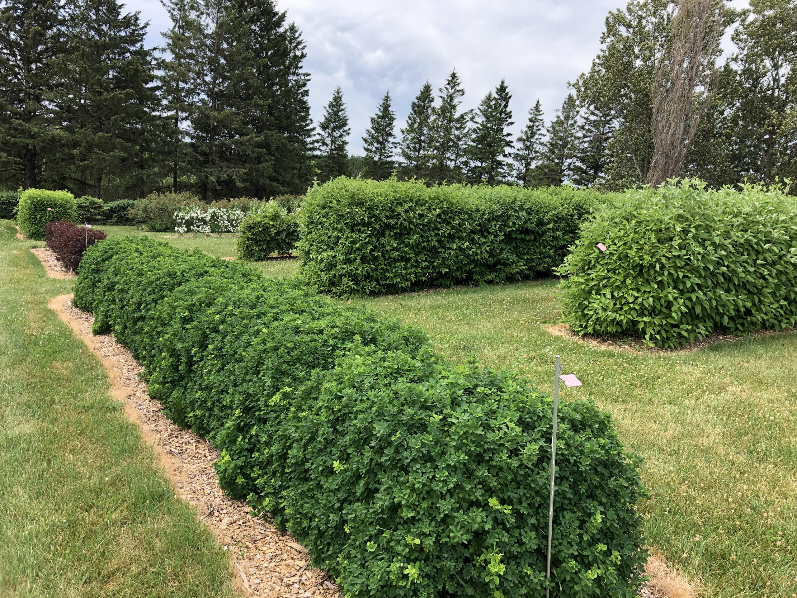 Cover image for Hedges: A Brief History and the Minnesota Landscape Arboretum Hedge Collection