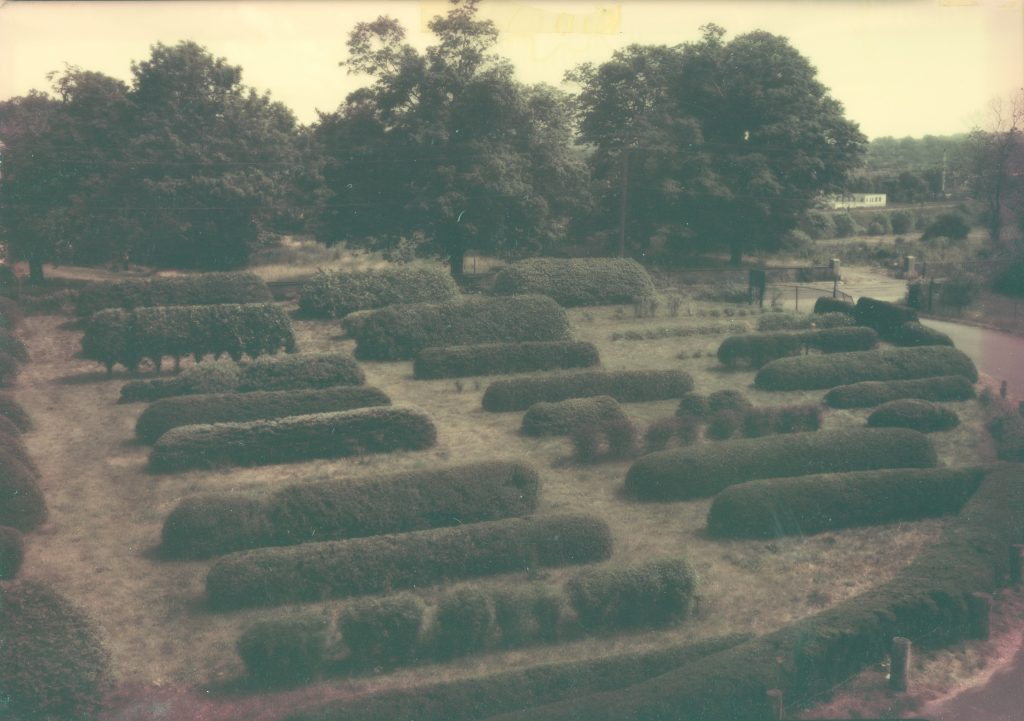 An old sepia colored aerial view of Arnold Arboretum's hedge collection.