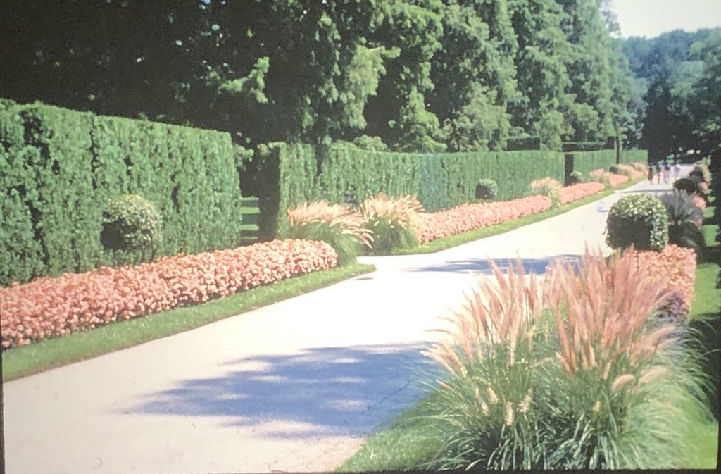 The Long Walk at Longwood Gardens, Kennett Square, PA, in 1968.