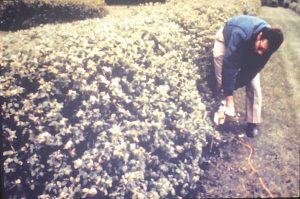 Mike Zins teaching about trees and shrubs at the MLA in the 1970s